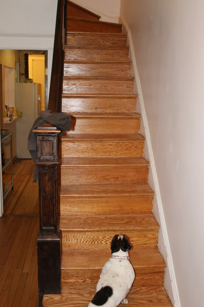 New staircase and a Sophia