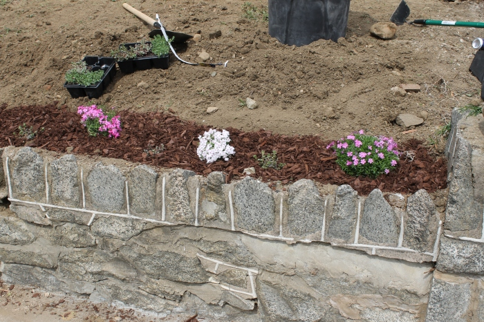 Mulched garden along the retaining wall